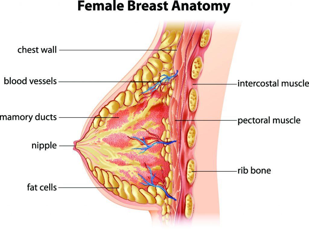 Nipple Surgery